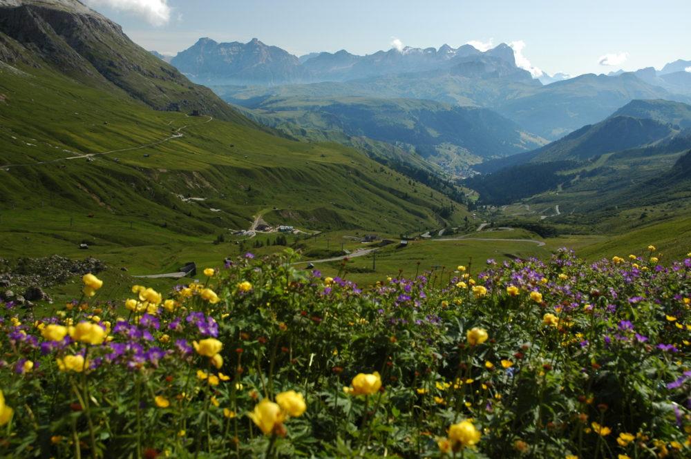 花咲き乱れるドロミテ。北イタリア世界遺産