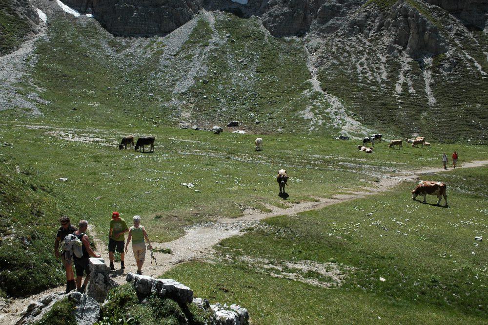 ドロミテの歩き方トレ・チーメ。リフージオロカテッリから下りが続き牛が放牧されている谷までおりてきました。