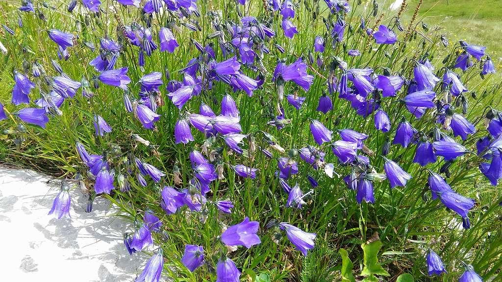 ドロミテの歩き方、ヴィア・デル・パン。花の季節に咲く花々を愛でながらゆったり歩きましょう。
