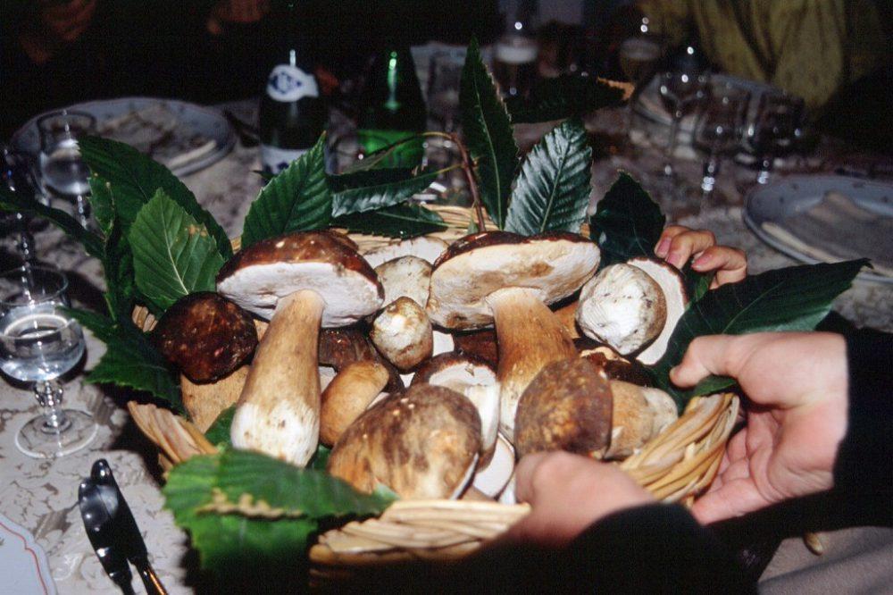 イスキア島には海に面したテルメ施設が多数あります。多くが食事付きの宿泊テルメ施設として、療養客、滞在客を受け入れています。